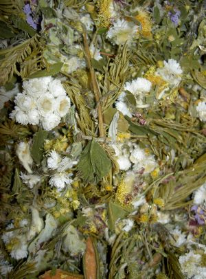Tisane Boréale du Grand Fonds